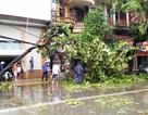 Ninh Bình: Thiệt hại nặng nề sau bão số 1