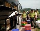 Hơn 1,3 tấn rắn đi cùng hành khách từ Nam ra Bắc