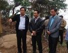 Đình chỉ Hạt trưởng Kiểm lâm vụ người dân phá rừng Sơn Trà