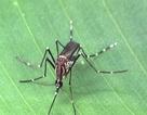 Đà Nẵng lên kế hoạch phòng chống vi rút Zika