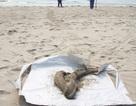 Cá chết dạt tới bờ biển Đà Nẵng