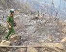 Đã dập tắt được vụ cháy rừng Nam Hải Vân