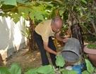 Đà Nẵng: Sốt xuất huyết tăng mạnh