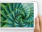 Nguy cơ khan hàng iPad mini được dự báo sớm