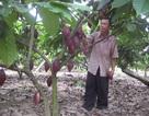 CIC với tham vọng dẫn dắt ngành hàng ca cao Việt Nam