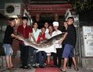 Cá lăng sông Mê Kông nặng 70kg cực hiếm lần đầu tiên xuất hiện tại Hà Nội