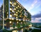 Đón sóng APEC, bất động sản Đà Nẵng bùng nổ