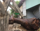 """Hàng chục khối gỗ """"khủng"""" trên xe tải thúc sập thành cầu, lao xuống nhà dân"""