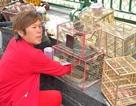 Chim phóng sinh bị mua đi bán lại đến... chết mới thôi