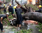 """Hơn 20 thanh niên """"đội mưa"""" để giải cứu nạn nhân bị cây cổ thụ đè"""