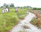Cán bộ đưa nước mặn vào ruộng lúa bị đề nghị cho thôi việc