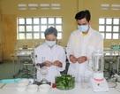 Học sinh trường làng nghiên cứu sáng tạo thuốc trừ sâu sinh học