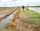 ĐBSCL mất trắng 81.000 ha tôm nuôi do hạn, mặn