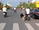 Bị phạt vì vừa chạy xe vừa dắt chó