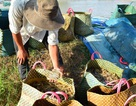 """Phạt một thương lái Trung Quốc """"đội lốt"""" khách du lịch thu mua hải sản"""