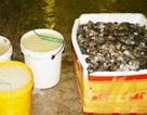 Bạc Liêu: Phát hiện 32 vụ tôm chứa tạp chất, phạt trên 2 tỷ đồng