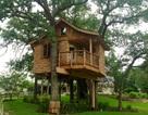 Những ngôi nhà cây ấn tượng như chỉ có trong... giấc mơ