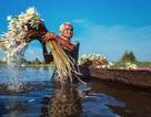 Cuộc sống thanh bình làng quê Việt lên báo Anh