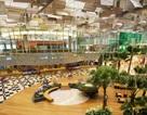 """Sân bay của Singapore tiếp tục được vinh danh """"tốt nhất thế giới"""""""