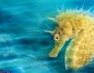 Khoảnh khắc đẹp ngạt thở của thế giới đại dương