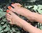 Cho cá rỉa chân - kiểu massage độc đáo ở philippines
