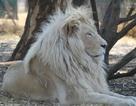 Nơi sở hữu những con thú hiếm nhất thế giới