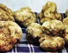 """""""Vua của các loại nấm"""" được ví như """"kim cương đen trong thực phẩm"""""""