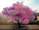 Những cái cây kỳ diệu như đến từ hành tinh khác