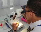 Khám phá khu chiếu xạ đưa quả vải thiều sang thị trường Úc