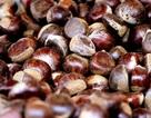 Chớm Đông, hạt dẻ Trùng Khánh thơm lừng cả góc chợ