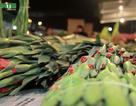 Chợ hoa đêm lớn nhất Hà Nội ngày giáp Tết