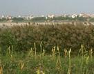 Hà Nội: Thổi hồn vào không gian xanh Bãi Giữa sông Hồng