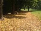 Tháng Chín mùa thu, lá khởi vàng chưa nhỉ…