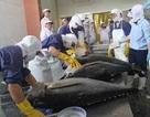 (Bài 3): Để nâng cao giá trị xuất khẩu cá Ngừ Đại Dương Việt Nam
