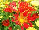 Chúm chím hoa Tết cười chào gió đông