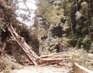 """Lốc xoáy quật đổ cây đa """"khủng"""", cả xã mất điện"""