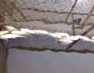 Cá chết hàng loạt bất thường trên sông Bùng