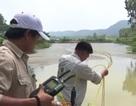 Cá chết bất thường trên sông Bùng: Rơm rạ mùa gặt gây ô nhiễm