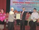 Quần thể 61 cây sa mu dầu và cây săng vì được công nhận cây di sản Việt Nam