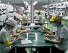 Tự ái ốc vít và giấc mơ đẳng cấp quốc tế doanh nghiệp Việt