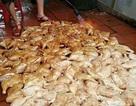 Rợn người: Đèn khò nướng trăm đùi gà trên nền nhà bẩn