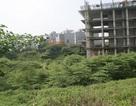Ngỡ ngàng rừng rậm trong hầm chung cư