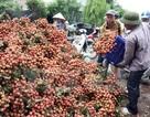 Việt Nam sẽ xuất khẩu lô vải thiều đầu tiên sang Mỹ vào ngày 30/5