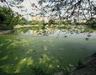 Hà Nội: Hồ lớn nhỏ chung cảnh ngập rác, bốc mùi