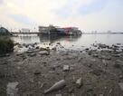 Bến du thuyền phớt lờ lệnh di dời, góc hồ Tây ô nhiễm trầm trọng