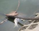 Hồ Đền Lừ bị xâm hại nghiêm trọng
