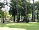 Đốn hạ, di dời 33 cây xanh trong công viên Tao Đàn để xây metro