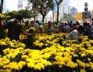TPHCM sẽ có hơn 130 chợ hoa Tết Bính Thân