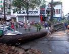 Điều tra nguyên nhân vụ cây đổ gây chết người