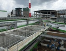 Bộ Công Thương dự kiến đề xuất dừng dự án Nhà máy bột giấy Lee & Man
